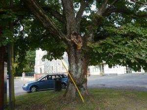 Jubilee Tree August 2014
