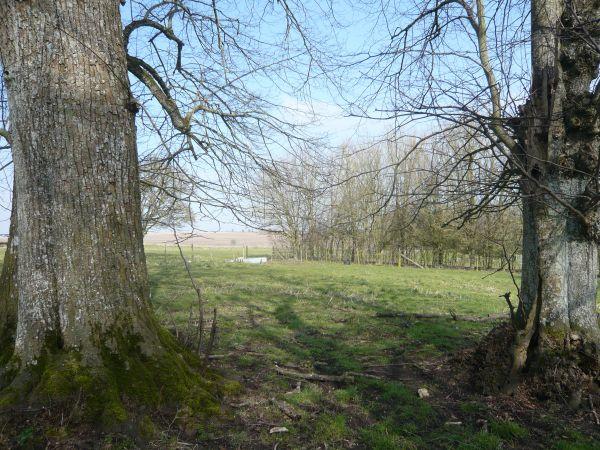churches path last trees small