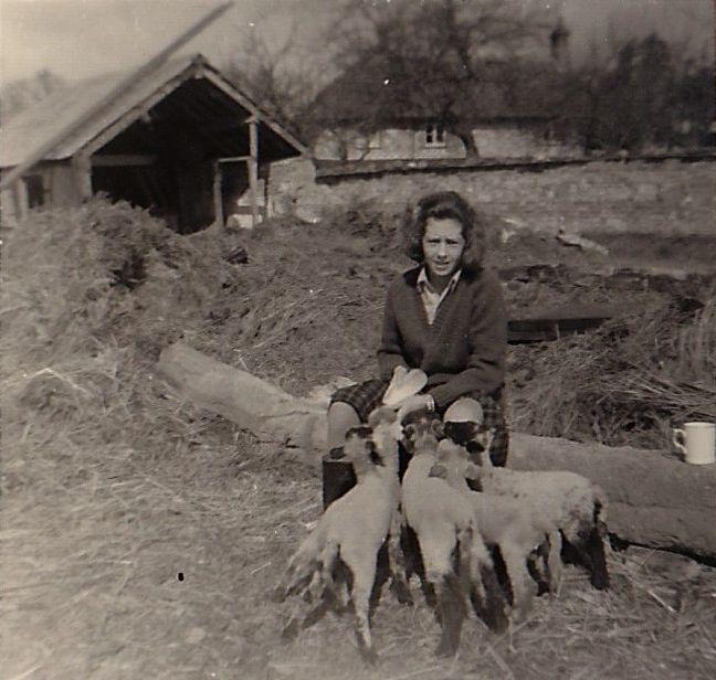 valdes-scott, roselle feeding lambs (2)